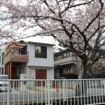 photo:富塚の家 桜が見える家